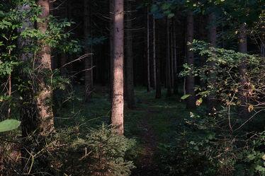 Bild mit Bäume, Dunkelheit, Waldrand, Erholung, Sonnenlicht, Ausspannen
