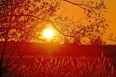 Bild mit Sonnenuntergang, Schilf, Äste, reet, Zweige, Deiche, Deichhinterland