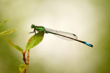 Bild mit Natur, Grün, Blätter, Makro, Blüten, Libelle, Ast, Busch, Blätterwald, Abends