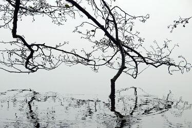 Bild mit Wasser, Gewässer, Herbst, Nebel, See, Spiegelungen, Kälte, Äste, Zweige, Herbsttag