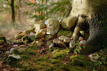 Bild mit Herbst, Baumstamm, Blätter, Gegenlicht, Wall, Kieselsteine, Baumwurzeln, Erdwälle