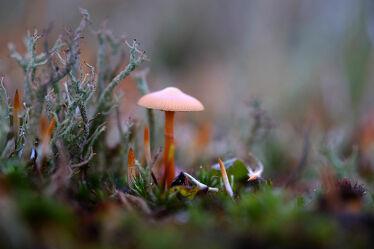 Bild mit Gräser, Wald, Waldboden, Felder, Pilze, Wiesen, Wandern, Moose, Moos, Sporne