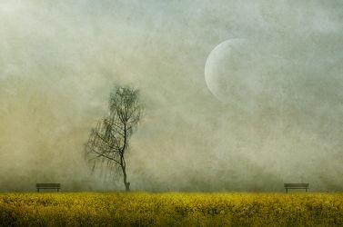 Bild mit Natur, Landschaften, Frühling, Mond, Landschaft, Wiese, romantik, Retro, Fantasy, VINTAGE, harmonie, Phantasie, Dekoration, Traum, Sehnsucht