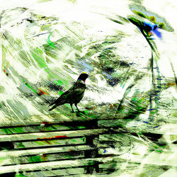 Bild mit Vögel, Abstraktes, Dohle, Dohlen