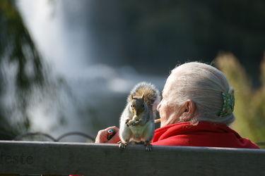 Bild mit Tiere, Städte, England, London, Stadt, Tier, Bank, Eichhörnchen, City, Stadtleben, Grossstadt, Londoner Stadtleben, Squirrel, Dame