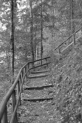 Bild mit Landschaften, Bäume, Wälder, Wald, Baum, Landschaft, Fotografie, schwarz weiß, SW, holztreppe