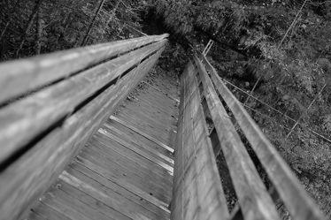 Bild mit Landschaften, Bäume, Wälder, Brücken, Wald, Baum, Landschaft, Brücke, Fotografie, schwarz weiß, SW