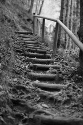 Bild mit Landschaften, Bäume, Wälder, Treppen, Wald, Baum, Landschaft, Fotografie, schwarz weiß, treppe, SW
