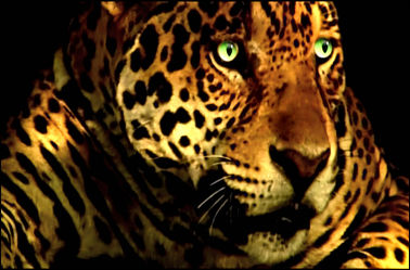 Leopard mit grünen Augen