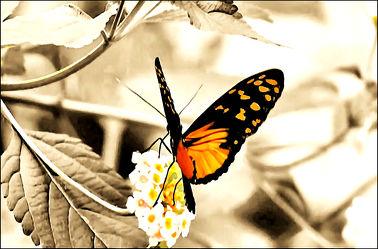 Bild mit Tiere, Natur, Insekten, Schmetterlinge, Makroaufnahme, Künstlerisch, Digital Art, Tiere & Insekten, Naturaufnahmen, Schmetterling, Insekt