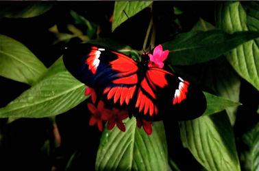Bild mit Insekten, Schmetterlinge, Makroaufnahme, Tiere & Insekten, Schmetterling, Insekt