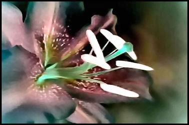 Bild mit Makroaufnahme, Blume, Lilie, Blumen im Makro, Filterbilder 2, Blumenmakro, Digitale Blumen