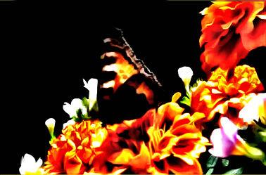Schmetterling 09