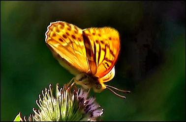 Schmetterling 02
