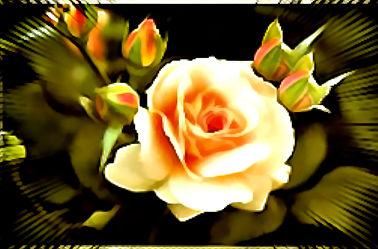 Bild mit Rosen, Rose, Makro Rose, Makro Rose, Rosenblüte, Blumen im Makro, Digitale Kunst, Blumenmakro, Digitale Blumen