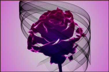 Bild mit Rose, Makro Rose, Rosenblüte, Blumen im Makro, Digital Art, Digitale Kunst, Blumenmakro, Digitale Blumen