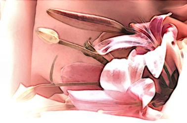 Bild mit Lilie, Digital Art, Blumiges, Digitale Blumen