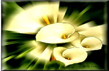 Bild mit Calla, Callas, Flower, Flowers, verfremdete blumen, Florales, Florale Fantasien, Florale Schönheiten