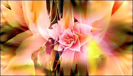 Edle rosa Blüten