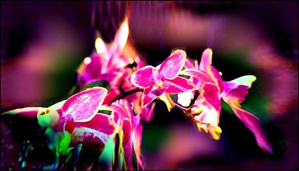 Bild mit Orchideen, Blumen im Makro, Digital Art, Blumiges, Blumenmakro, Digitale Blumen