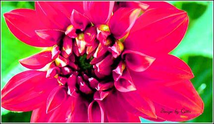 Bild mit Blumen, Blumen im Makro, blüte, Blumenmakro