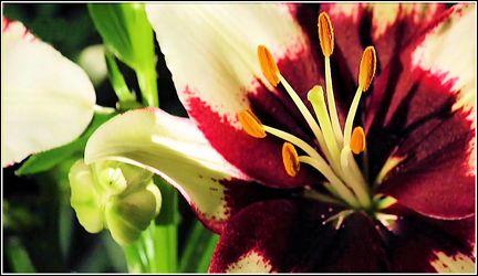Makro Blüte