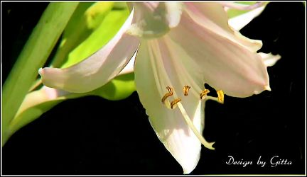 Bild mit Blumen, Lilien, Blütenzauber, Blumen im Makro, Blumiges, Blumenmakro
