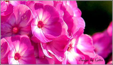 Bild mit Blumen, Makroaufnahme, Blume, Makro, Blumen im Makro, blüte