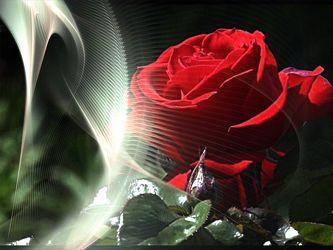 Bild mit rote Rosen, Bildercollagen, Stillleben & Collagen, Collagen, Collage, Digitale Blumen, Blumen Collagen