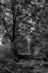 Bild mit Landschaften, Bäume, Wälder, Wald, Baum, Landschaft, schwarz weiß, SW, märchen
