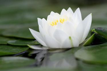Bilder mit Blumen & Pflanzen
