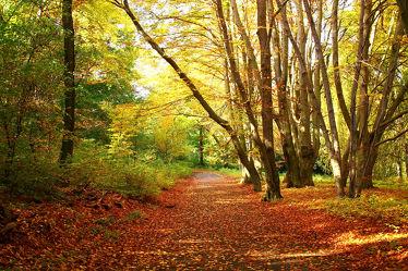 Bild mit Natur, Landschaften, Landschaften, Wälder, Herbst, Wald, Berlin