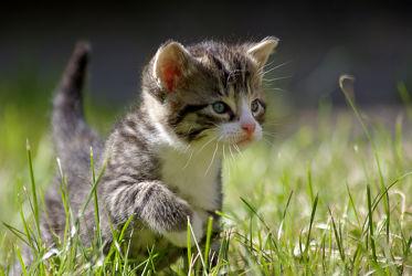 Bild mit Tiere, Natur, Katzen, Tier, Katze, Umwelt, Katzenbaby