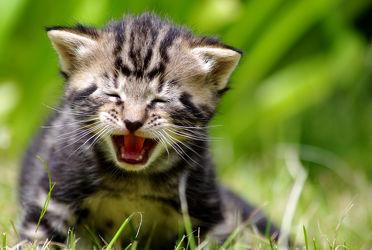 Bild mit Tiere, Natur, Katzen, Tier, Katze, Tierfotografie, Animal, Kater, Umwelt, Tierbild, Tierbilder, Tierfoto, kitty