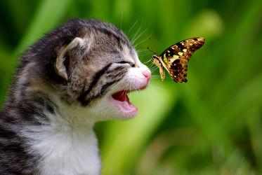 Bild mit Tiere, Natur, Katzen, Schmetterlinge, Tier, Katze, Schmetterling, Umwelt, Katzenbaby