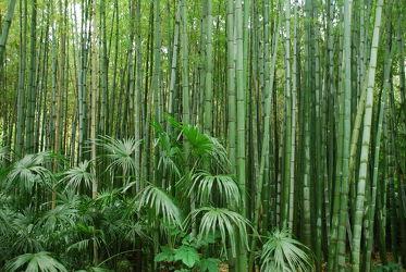 Bild mit Grün, Bambus, Tapete, Tapeten Muster, Harmonie in Grün, wandtapete, fototapete, bambuswald