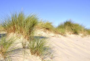 Bild mit Grün, Sand, Strand, Sandstrand, Ostsee, Dünen, Dünengras, Wellness, Strandhafer, Hell
