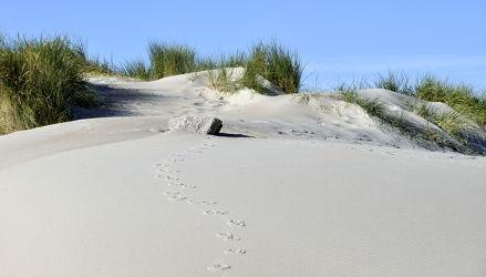 Bild mit Grün, Sand, Strand, Sandstrand, Ostsee, Dünen, Dünengras, Wellness, Strandhafer, Spuren, Hell, freundlich