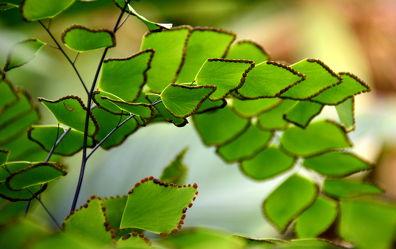 Bild mit Grün, farn, Wellness, Tapete, fototapete, farnblatt, farnblätter, green, wandschmuck