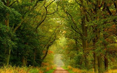 Bild mit Bäume,Herbst,Baum,Weg,Waldweg,Spazierweg,Allee,baumallee,herbstlich