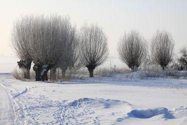 Bild mit Bäume, Winter, Schnee, Baum, Weihnachten, winterlandschaft, Schneelandschaften, Winterzeit, Frost