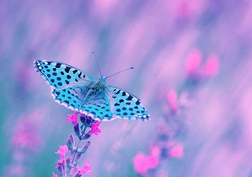 Bild mit Tiere, Natur, Blumen, Insekten, Blau, Blume, Abstrakt, Experimentell, Schmetterling, blüte, pink, Insekt, pastellfarben