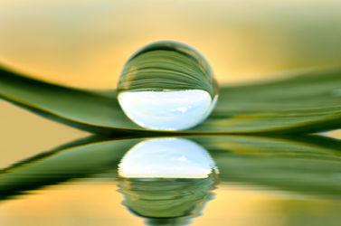 Bild mit Natur, Wasser, Pflanzen, Gräser, Pflanze, Gras, Blatt, Wassertropfen, Wasserperlen, Spiegelung, Tropfen, Grashalm, Wasserperle, wasserkugel