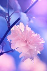 Buschblüte