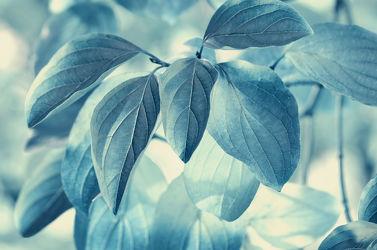 Bild mit Pflanzen, Pflanzen, Blumen, Blau, Blätter, Pflanze, Blatt, Flora, Flora, Zweig