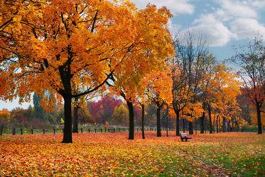 Bild mit Natur, Landschaften, Bäume, Jahreszeiten, Herbst, Laubbäume, Baum, Blätter, Laubbaum, Blatt, Bank, Herbstblätter, Laub, Jahreszeit, herbstblatt, herbstfarben