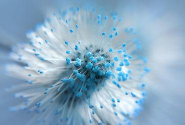 Bild mit Pflanzen, Blumen, Frühling, Blau, Türkis, Makroaufnahme, Makro, Abstrakt, detail, dekorativ, Zweig, Kätzchen, weidenkätzchen