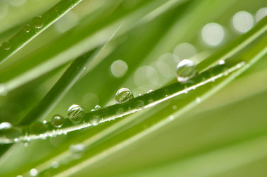 Bild mit Natur, Grün, Makro, Gras, Wassertropfen, Regentropfen, Tropfen, Flora, Tau, Regen, Tautropfen