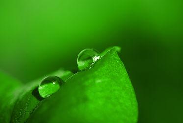 Bild mit Natur, Wasser, Grün, Makroaufnahme, Blume, Pflanze, Makro, Blatt, Wassertropfen, Regentropfen, Tropfen, Wellness, blüte, detail, Tau, Deko, dekorativ, beauty, Tautropfen, Dekoration