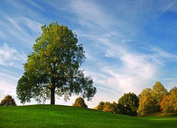 Bild mit Natur, Natur, Grün, Landschaften, Himmel, Bäume, Wolken, Herbst, Blau, Sommer, Sonne, Baum, Landschaft, Park, Erholung, Parkanlage